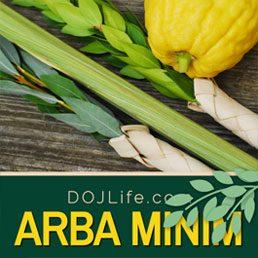 Purchase Arba Minim for Succos